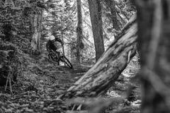 Sandy Ridge Enduro Mountain Bike Race Royalty Free Stock Photo