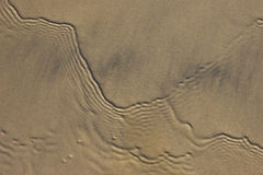 Sandy and Ripples. Parallel sets of wave ripples in shallow water in intertidal zone Royalty Free Stock Photos