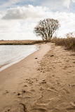 Sandy river beach and a bare tree Stock Photos