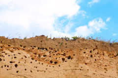 Sandy river with swallow nests Royalty Free Stock Photo