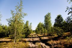 Sandy road. And birch trees with a clear blue sky Stock Photos