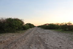 Sandy road in the African Bushveld. Gravel road with greenery and bushes Stock Photos