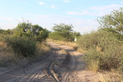Sandy road in the African Bushveld. Gravel road with greenery and bushes Stock Photography