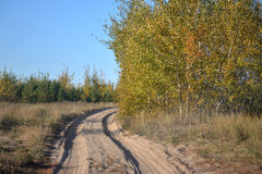 Sandy road in the autumn forest Royalty Free Stock Photo