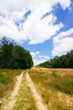 Sandy road  blue sky. Sand path in a rural environment with blue cloudy sky Royalty Free Stock Photos