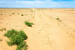 Sandy road in the desert. Sandy road in the desert in the Astrakhan region on a clear Sunny day Royalty Free Stock Photography