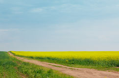 Sandy road among fields of flowering rapeseed Royalty Free Stock Image