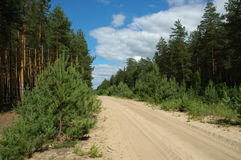 Sandy road in forest. Sandy road in pine forest Stock Photos