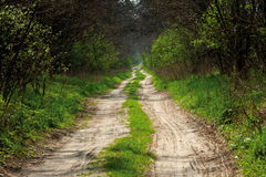 Sandy road in forest Stock Image