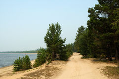 Sandy road in the forest. Royalty Free Stock Photography