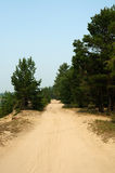 Sandy road in the forest. Royalty Free Stock Photos