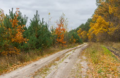 Sandy road in mixed forest Stock Photo