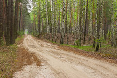 Sandy road in mixed forest at spring season Stock Photography