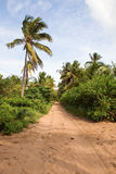 Sandy road in Mozambique, Africa. Royalty Free Stock Image