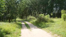 Sandy road in a park among green trees and shrubs stock footage
