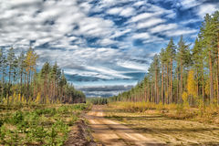 Sandy road in the  pine forest Stock Photography