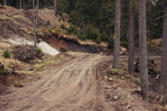 Sandy road by pine forest Stock Photo