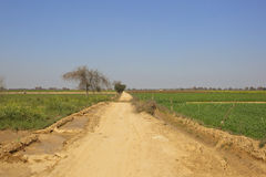 Sandy road in rajasthan Royalty Free Stock Photos