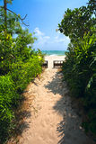 Sandy road to the beach, plants Stock Photo