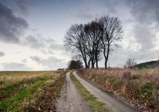 Sandy road and trees Royalty Free Stock Photos