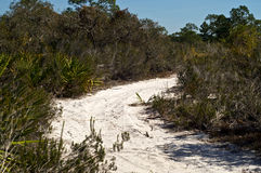 Sandy road in tropical florida Stock Images