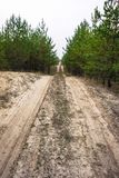 Sandy road in a young pine forest stock photos