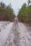 Sandy road in a young pine forest stock photography