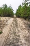 Sandy road in a young pine forest stock image