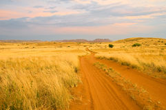 Sandy savanna road Royalty Free Stock Image