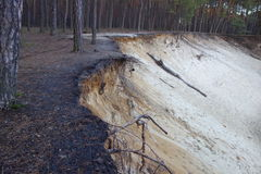 Sandy scarp in the forest Stock Image