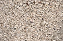 Sandy Seashells On The Beach Stock Foto's