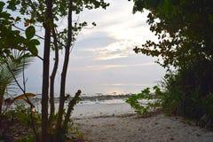 Sandy Shady Path som ska sättas på land till och med kust- gröna växter - Kalapathar strand, Havelock ö, Andaman Nicobar, Indien royaltyfri bild