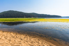 The sandy shore of the lake Stock Photography