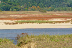 Sandy shore of the Nakdong River Royalty Free Stock Image