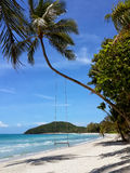 The sandy shores of the azure sea. Waves and palm tree with swing. Stock Photo