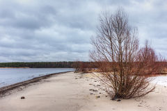 Sandy shores of the Baltic Sea Royalty Free Stock Photo