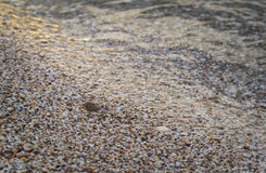 The sandy shores of the sea, dotted with seashells.  Stock Photo
