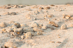 Sandy soil Stock Photography