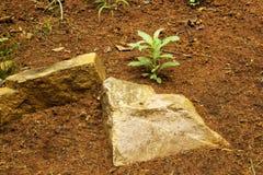 Sandy Soil Rocks rouge naturel et plantes vertes Image stock