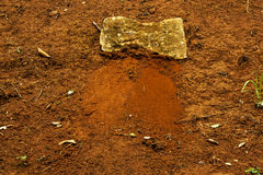 Sandy Soil Rocks rouge naturel et plantes vertes Photographie stock libre de droits