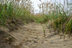 Sandy-Spur durch das Gras in einem sumpfigen Bereich Stockfoto