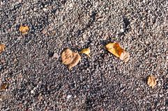 Sandy stone ground with autumn leaves. background, texture. Royalty Free Stock Images