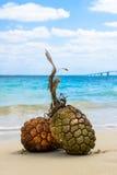 Sandy-Strände und tropisches Bild Stockbild