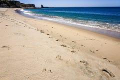 Sandy-Strand auf der pazifischen Küstenlinie, Wilder Ranch State Park nah an Santa Cruz, Kalifornien lizenzfreie stockfotos