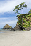 Sandy-Strand mit überhängenden Bäumen Stockfotografie
