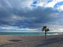 Sandy-Strand mit einem kleinen Baum und einem bewölkten Himmel lizenzfreies stockfoto