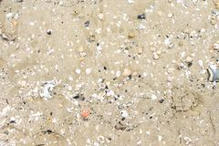 Sandy surface with shells and pebbles. stock photo