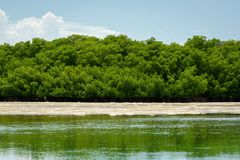 Sandy tidal flats. And mangrove trees in Key West, Florida. Image taken on August 17, 2017 royalty free stock images