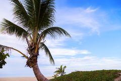 Sandy tropical beach with coconut palm tree frame beautiful beac Royalty Free Stock Photo