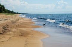 Sandy-Ufer von Baikal Ust-Barguzin stockfoto